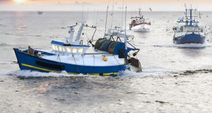 Eight illegal fishing boats, caught entering UAE water area